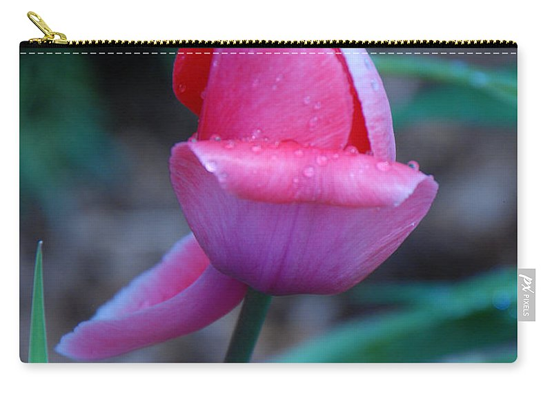 Tulip Carry-all Pouch featuring the photograph Tulip After The Rain by Grace Grogan