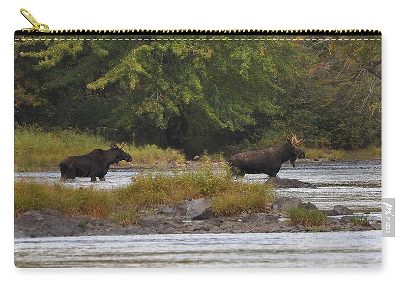Moose Carry-all Pouch featuring the photograph Two Bull Moose In Maine by Glenn Gordon