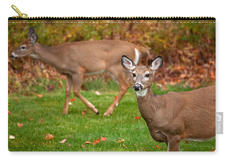Deer Carry-all Pouch featuring the photograph Two Visitors by Karol Livote