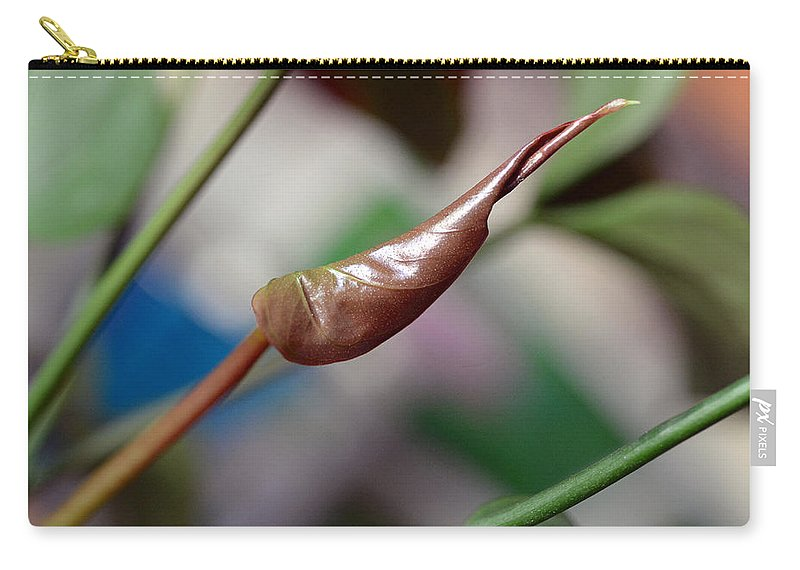 Nature Carry-all Pouch featuring the photograph Unfolding Leaf by Lisa Phillips