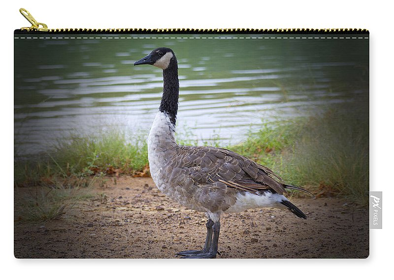 Canadian Goose Carry-all Pouch featuring the photograph Upright Stance by Douglas Barnard