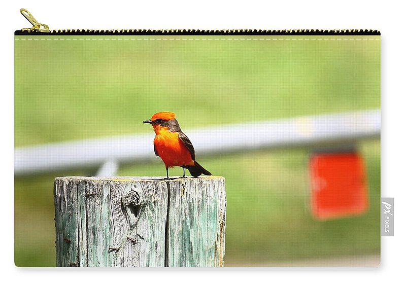 Bird Carry-all Pouch featuring the photograph Vermilion Flycatcher by Diana Hatcher