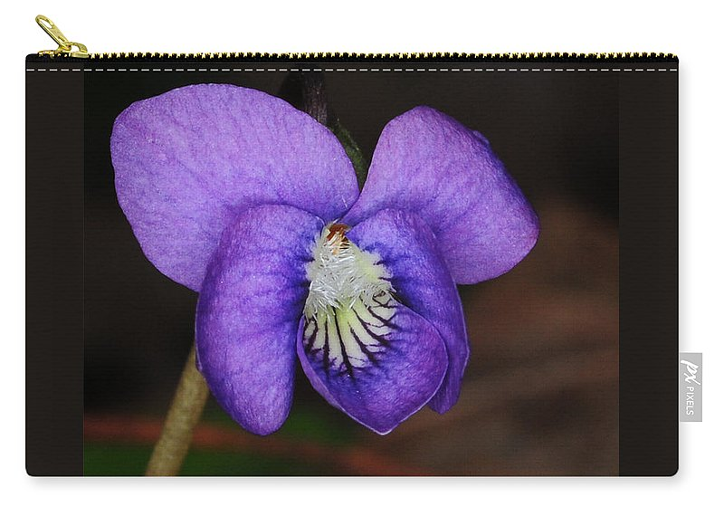 Purple Viola Carry-all Pouch featuring the photograph Viola by Paul Ward