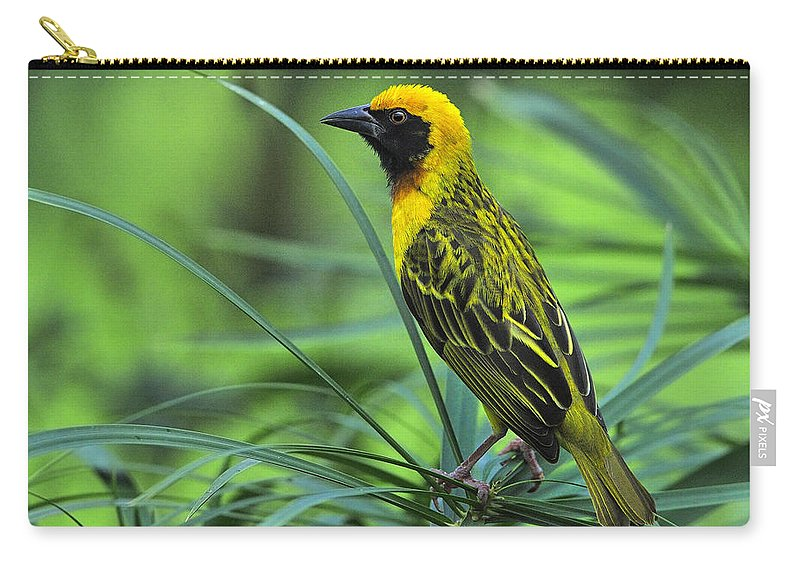 Vitelline Masked Weaver Carry-all Pouch featuring the photograph Vitelline Masked Weaver by Tony Beck