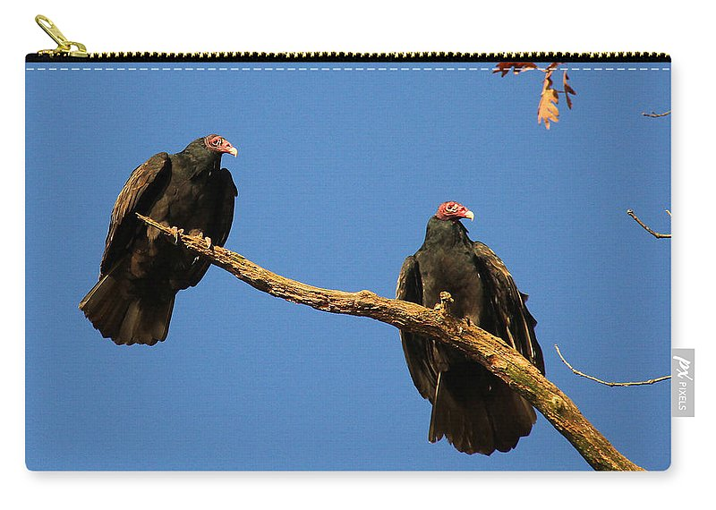 Turkey Vulture Carry-all Pouch featuring the photograph Vultures On A Branch by Doris Potter