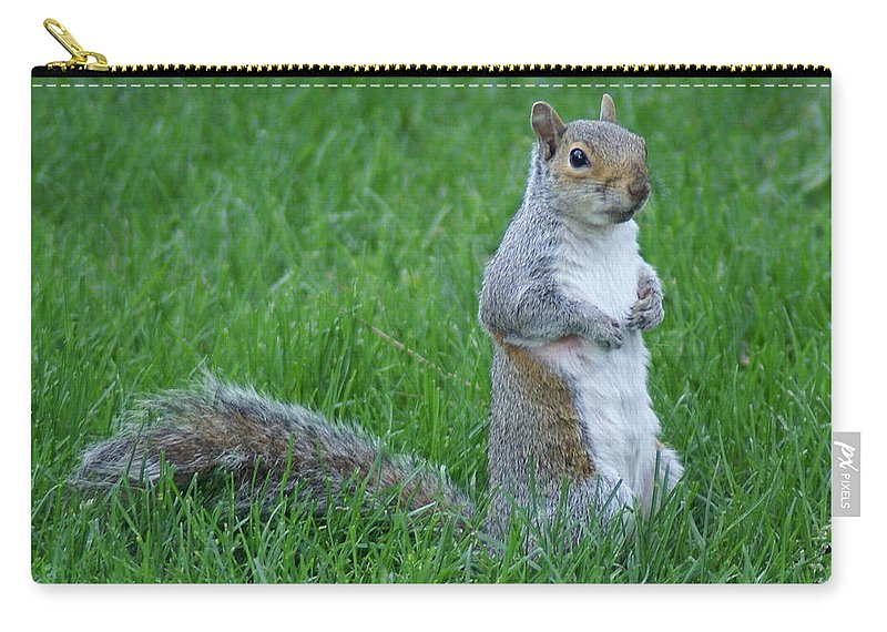 Squirrels Carry-all Pouch featuring the photograph Waiting by Ben Upham III
