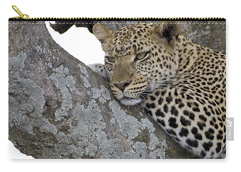Leopard Carry-all Pouch featuring the photograph Waiting For Nightfall by Max Waugh