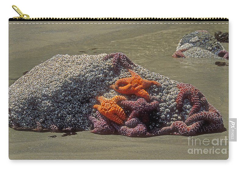 Starfish Marine Life Carry-all Pouch featuring the photograph Waiting For The Tide by Sandra Bronstein