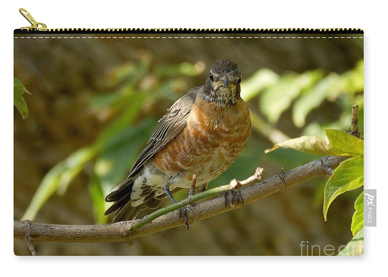 Robin Carry-all Pouch featuring the photograph Waiting Line by Lori Tordsen