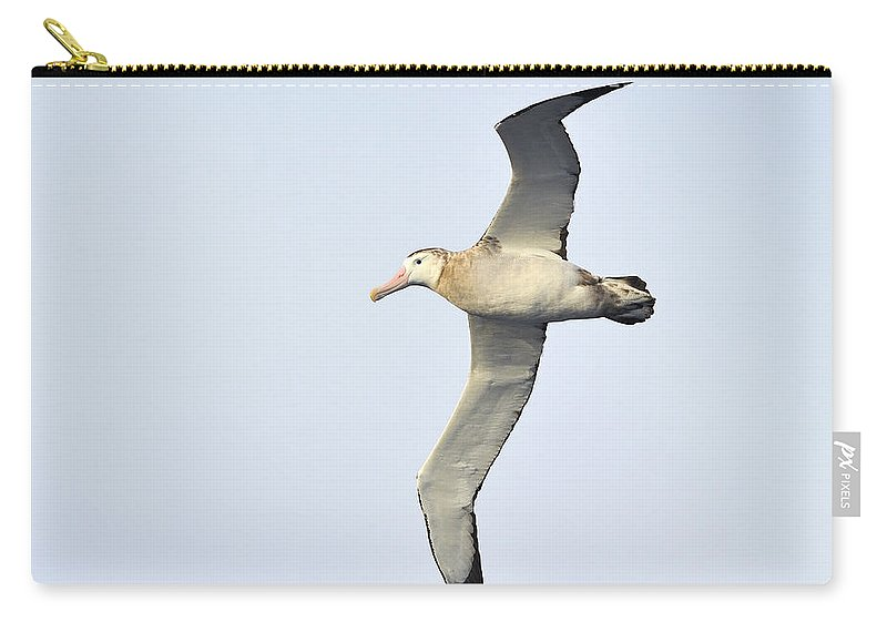 Wandering Albatross Carry-all Pouch featuring the photograph Wandering Albatross by Tony Beck