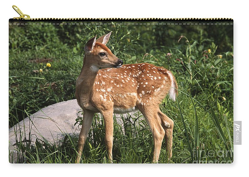 Sandra Bronstein Carry-all Pouch featuring the photograph Watching For Mom by Sandra Bronstein