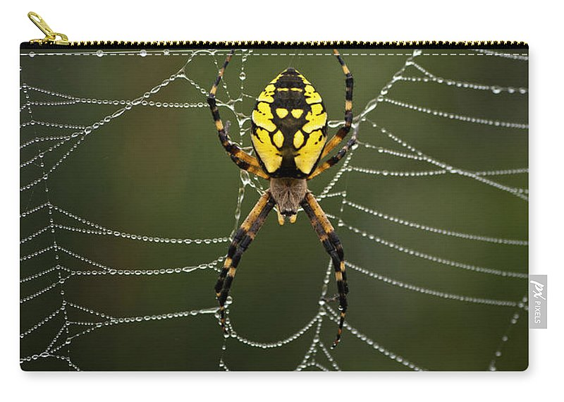 Spider Carry-all Pouch featuring the photograph Weave Master by Susan Capuano