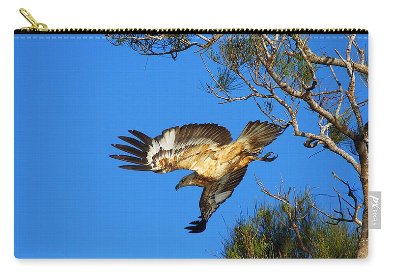 Wedge-tailed Eagle Carry-all Pouch featuring the photograph Wedge-tailed Eagle by Andrew McInnes