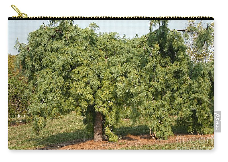 Weeping White Pine Carry All Pouch For Sale By Susan Herber