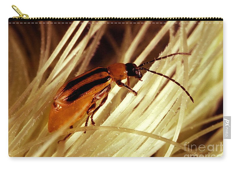 Western Corn Rootworm Carry-all Pouch featuring the photograph Western Corn Rootworm Beetle by Science Source