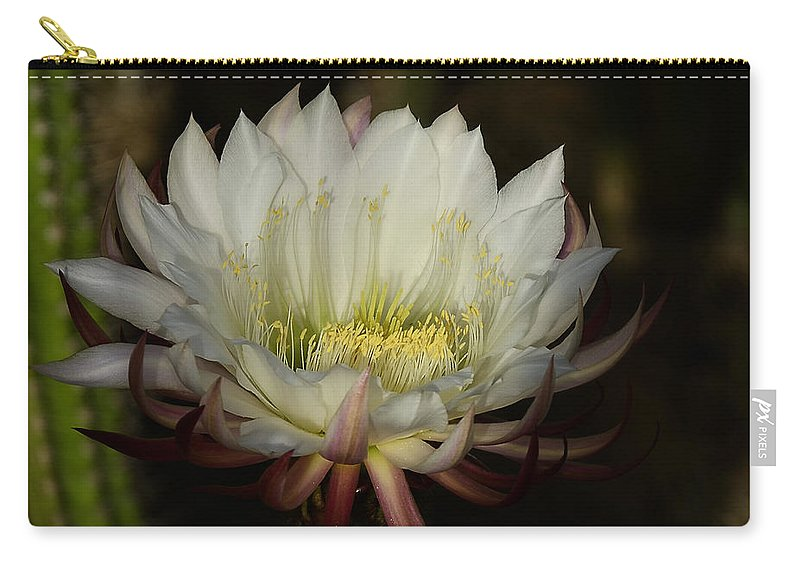 Echinopsis Carry-all Pouch featuring the photograph White Echinopsis by Saija Lehtonen