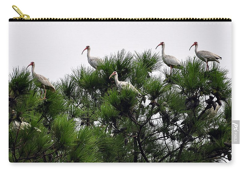 Ibis Carry-all Pouch featuring the photograph White Ibises Roosting by Al Powell Photography USA