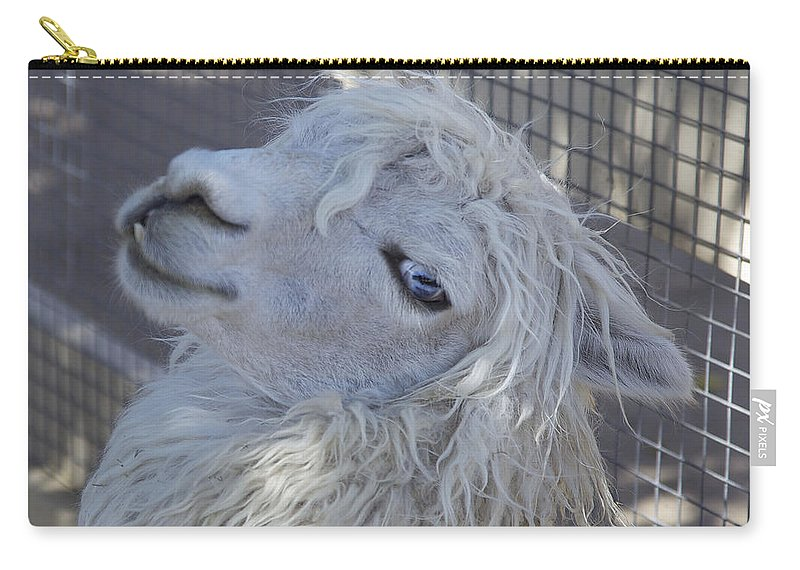 Animals Carry-all Pouch featuring the photograph White Llama by Portraits By NC