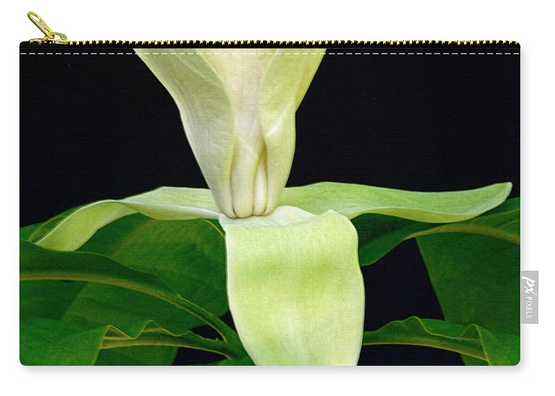 Magnolia Blossom Carry-all Pouch featuring the photograph White Magnolia by Dave Mills