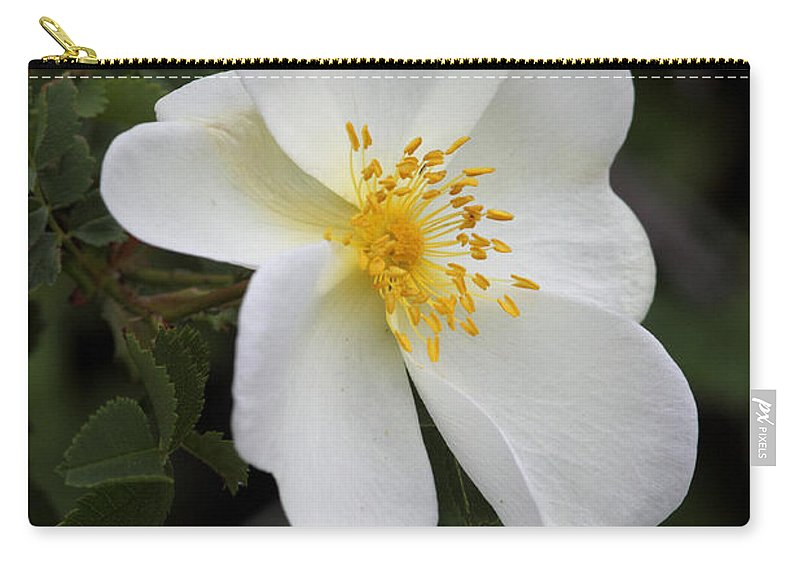 Doug Lloyd Carry-all Pouch featuring the photograph White Rose by Doug Lloyd