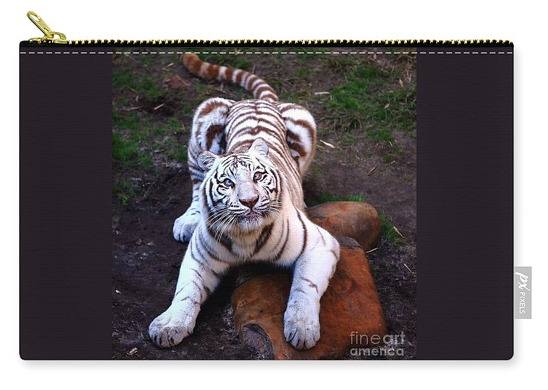 Siberia Carry-all Pouch featuring the photograph White Tiger 2 by Randy Matthews