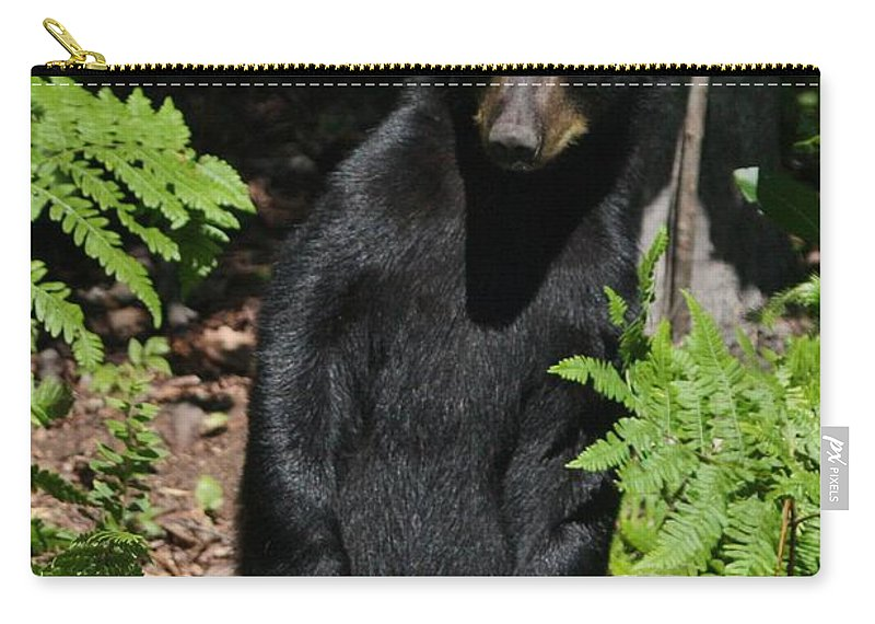 Black Bear Carry-all Pouch featuring the photograph Whose Coming To Visit? by Teresa McGill