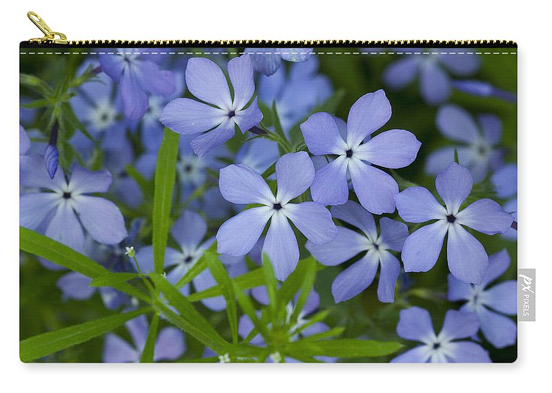 Bloom Carry-all Pouch featuring the photograph Wild Blue Phlox Flower 1 A by John Brueske