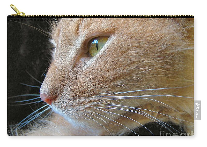 Cat Carry-all Pouch featuring the photograph Window Seat by Art Dingo