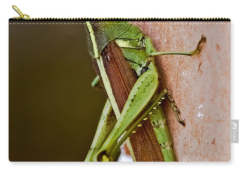 Grasshopper Carry-all Pouch featuring the photograph Wings In Brown by DigiArt Diaries by Vicky B Fuller