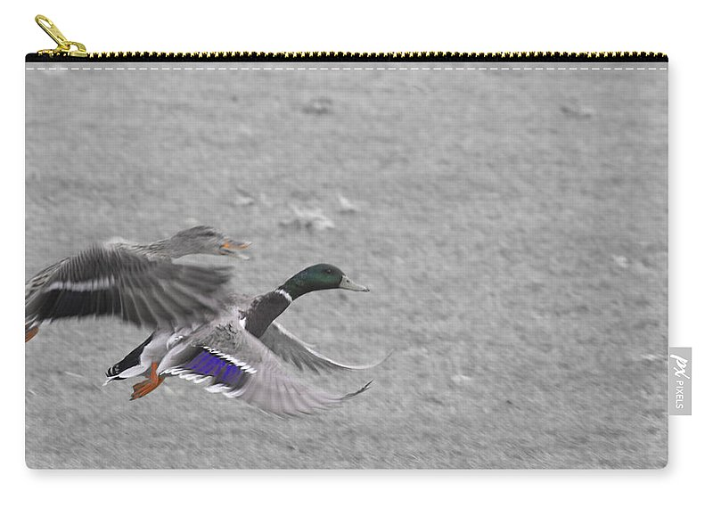 Ducks Flying Carry-all Pouch featuring the photograph With The Finishing Line In Sight by Douglas Barnard