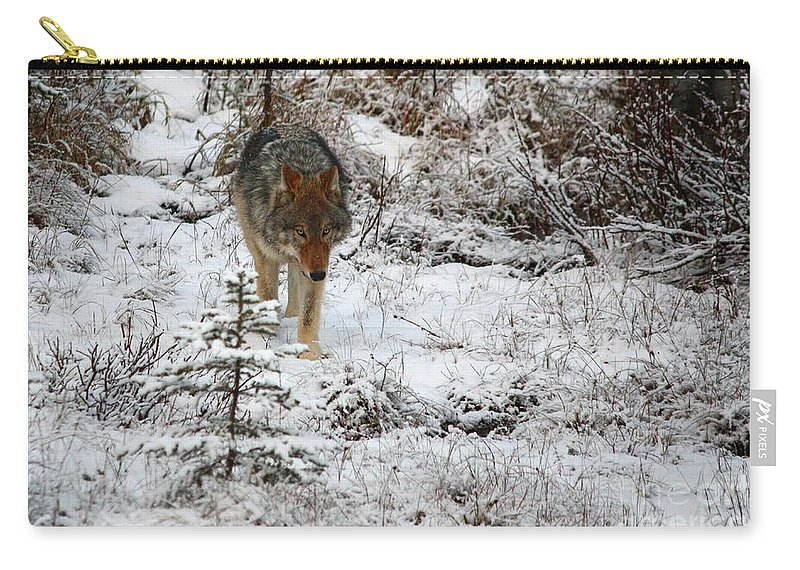 Wolf Carry-all Pouch featuring the photograph Wolf On The Prowl by James Anderson