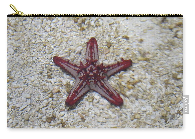 Beauty Star Carry-all Pouch featuring the photograph Wonder Star Fish by Sonali Gangane