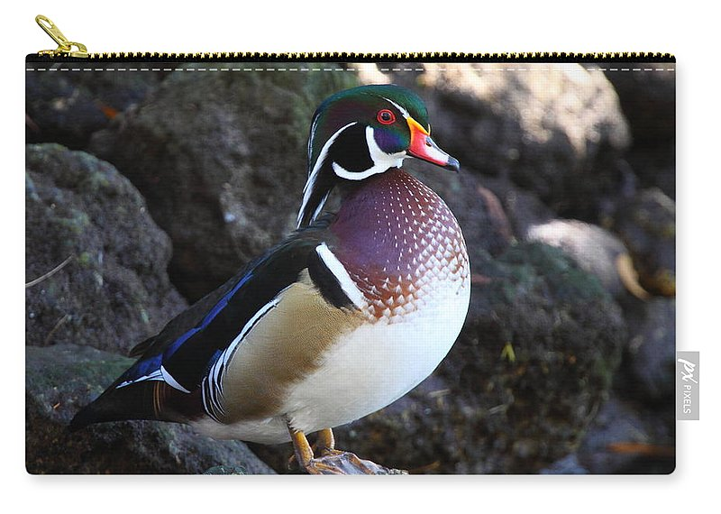 Duck Carry-all Pouch featuring the photograph Wood Duck by Bruce J Robinson