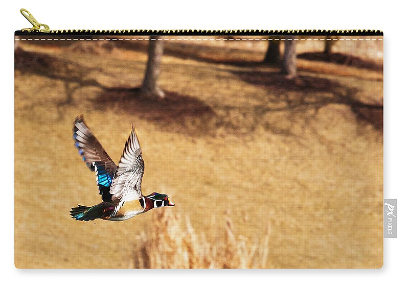 Wood Duck Carry-all Pouch featuring the photograph Wood Duck In Fflight by Edward Peterson