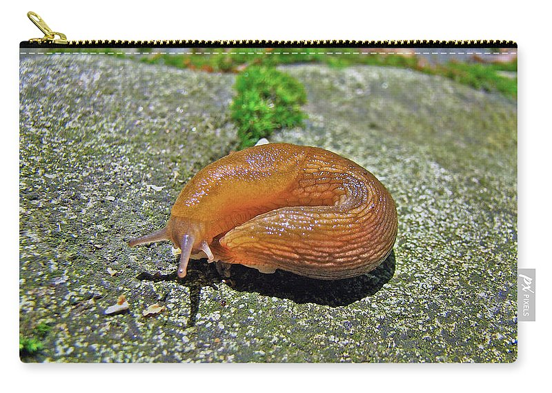 Slug Carry-all Pouch featuring the photograph Working On My Tan - Arion Subfuscus Slug by Mother Nature