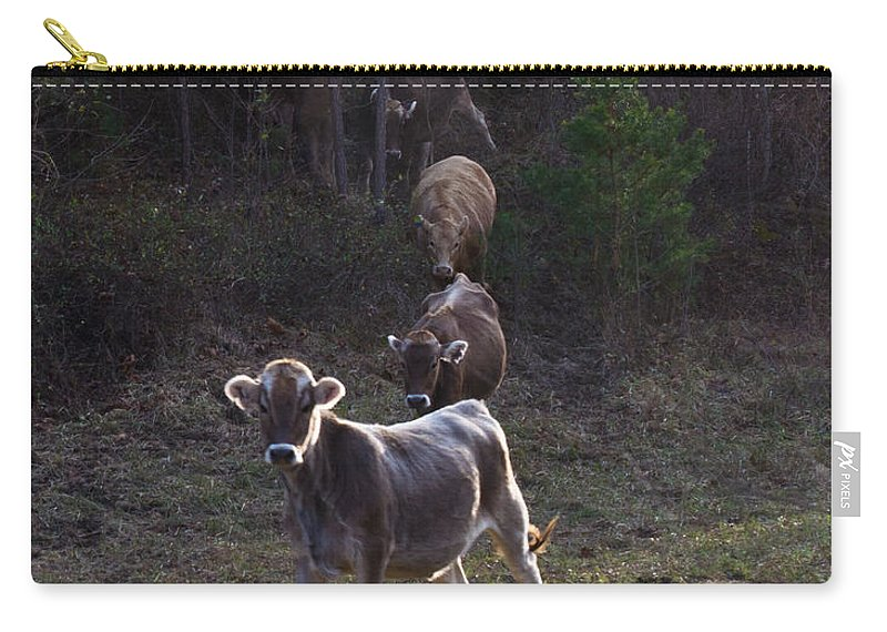 Yearling Carry-all Pouch featuring the photograph Yearling On The Run by Douglas Barnett