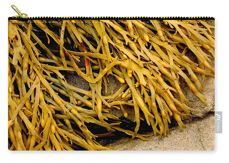 Kelp Carry-all Pouch featuring the photograph Yellow Kelp by Brent L Ander