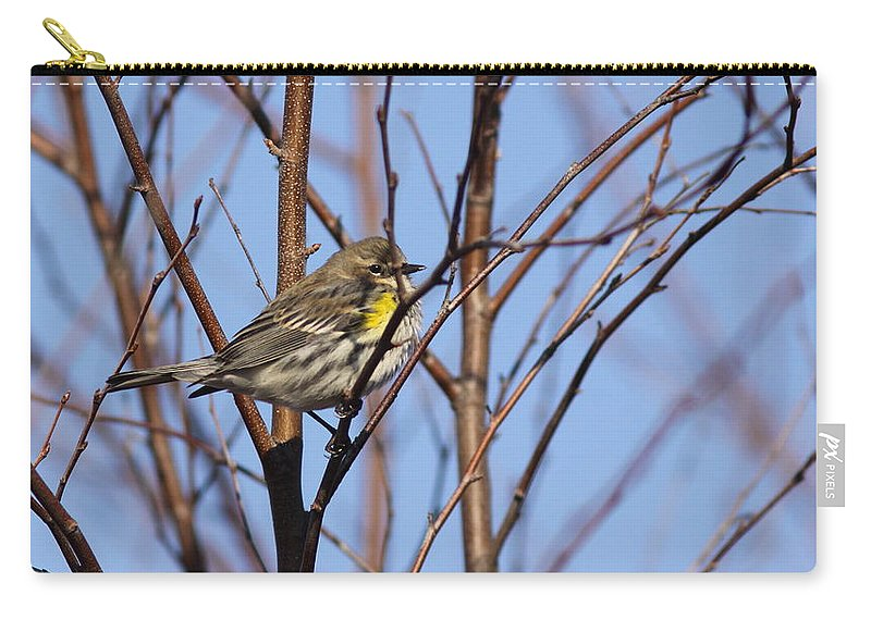 Pine Warbler Carry-all Pouch featuring the photograph Yellow-rumped Warbler - Placid by Travis Truelove