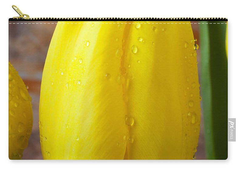 Yellow Tulip Carry-all Pouch featuring the photograph Yellow Tulip With Dew by Garry Gay