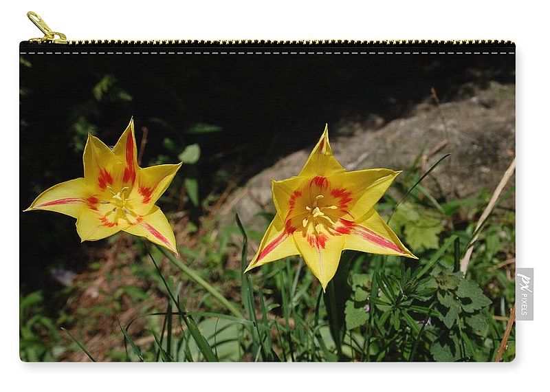 Tulips Carry-all Pouch featuring the photograph Yellow Tulips by Aimee L Maher ALM GALLERY
