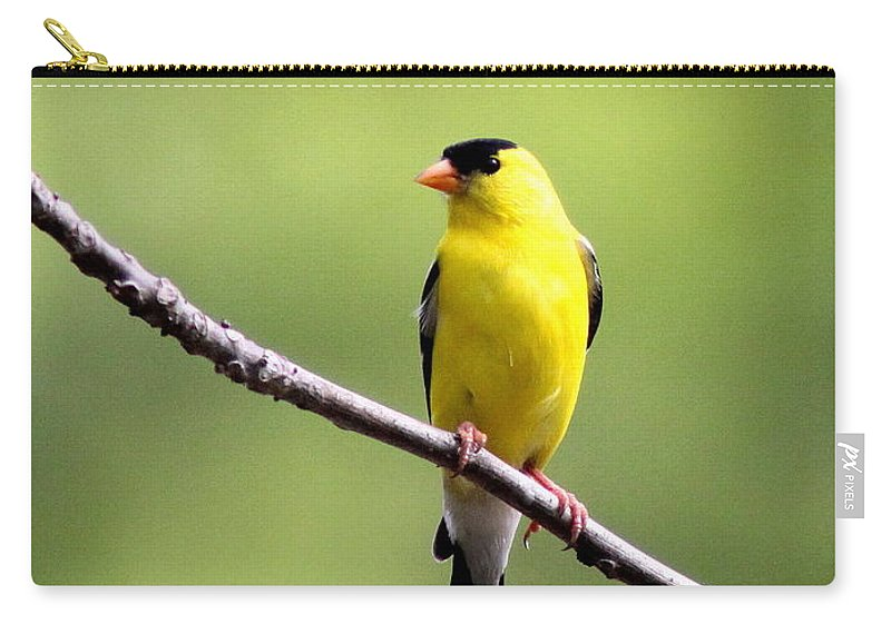 Goldfinch Carry-all Pouch featuring the photograph Yellow Tux by Travis Truelove