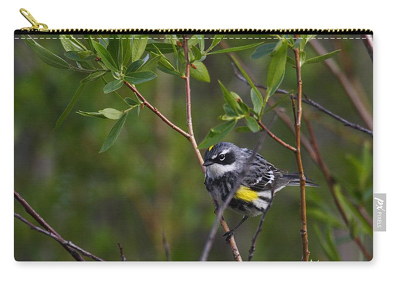 Alaska Carry-all Pouch featuring the photograph Yellowrumped Warbler by Doug Lloyd