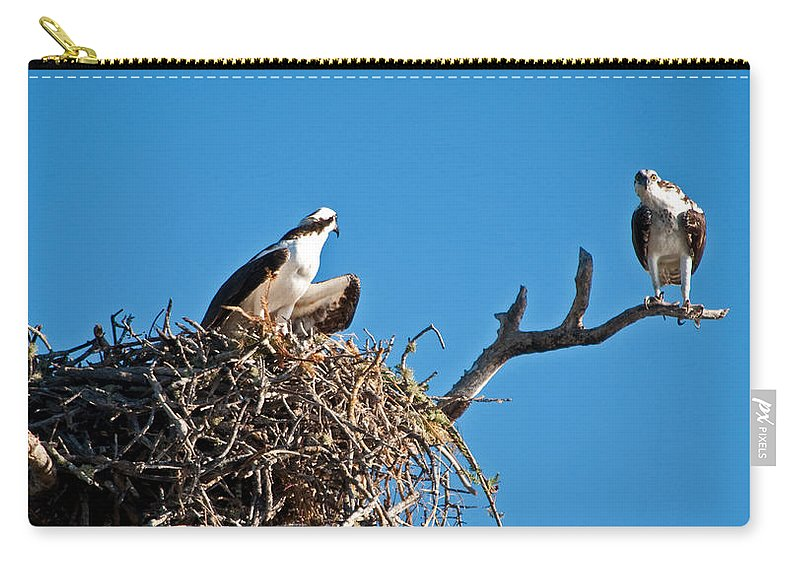 Osprey Carry-all Pouch featuring the photograph You Lookin At Me by Christine Stonebridge