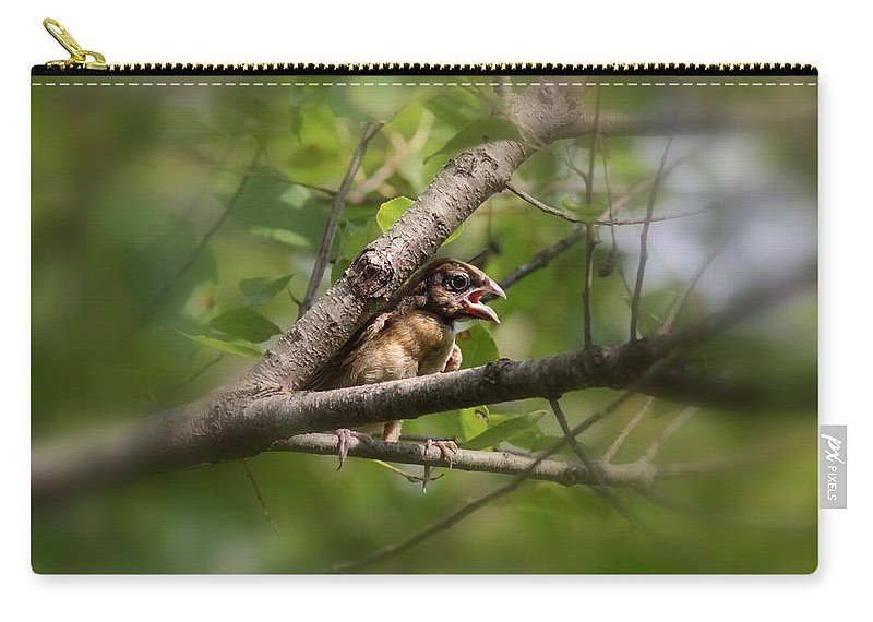 Blue Grosbeak Carry-all Pouch featuring the photograph Young And Scared by Travis Truelove