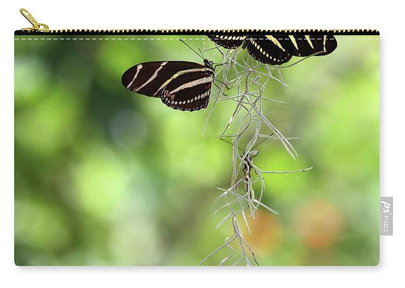 Zebra Carry-all Pouch featuring the photograph Zebra Butterflies Hanging Out by Sabrina L Ryan