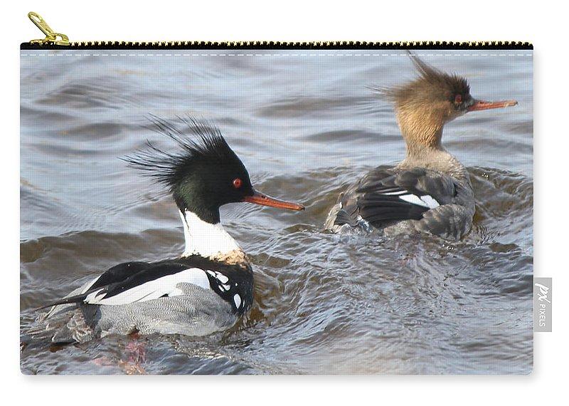 Redbreasted Merganser Duck Bird Photography Wallart Artwork Art Home Office Cellphone Pillows Decor Carry-all Pouch featuring the photograph Red-breasted-merganser-ducks by Cynthia Kirby