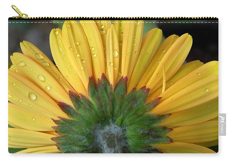 Flowers Carry-all Pouch featuring the photograph Water Drops On Gerbera Daisy by Amy Fose