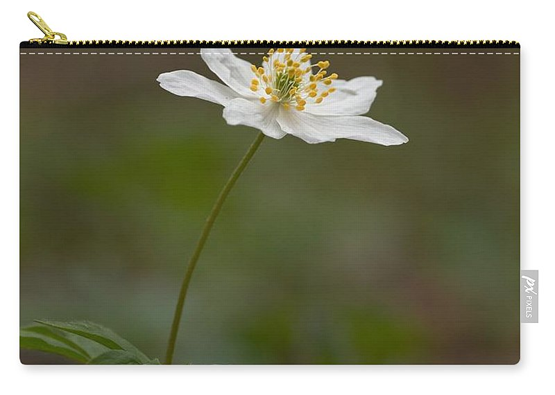 Lehtokukka Carry-all Pouch featuring the photograph Wood Anemone by Jouko Lehto