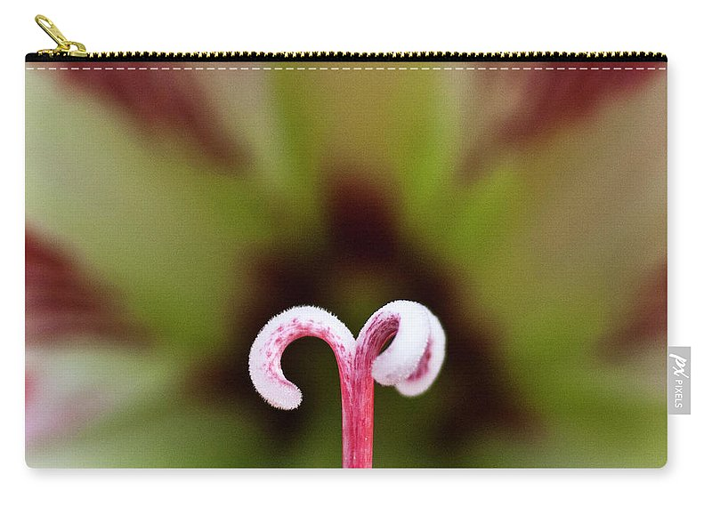 Amaryllis Carry-all Pouch featuring the photograph Amaryllis Flower by Heiko Koehrer-Wagner