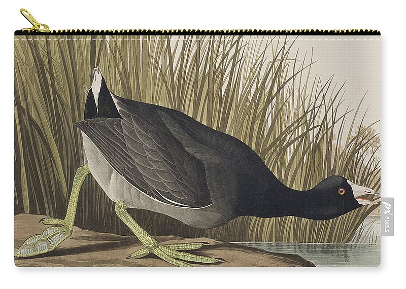 Coot Carry-all Pouch featuring the painting American Coot by John James Audubon